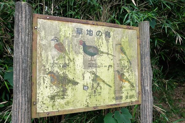 雄蛇ヶ池 野鳥