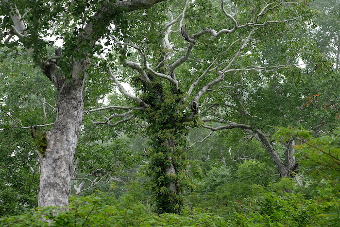 印象的な木