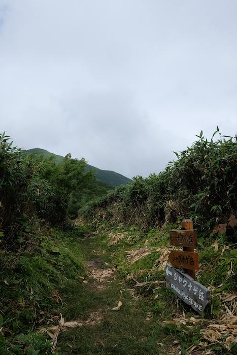 ビーナスの丘