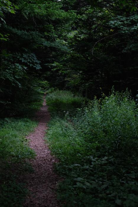100年の森