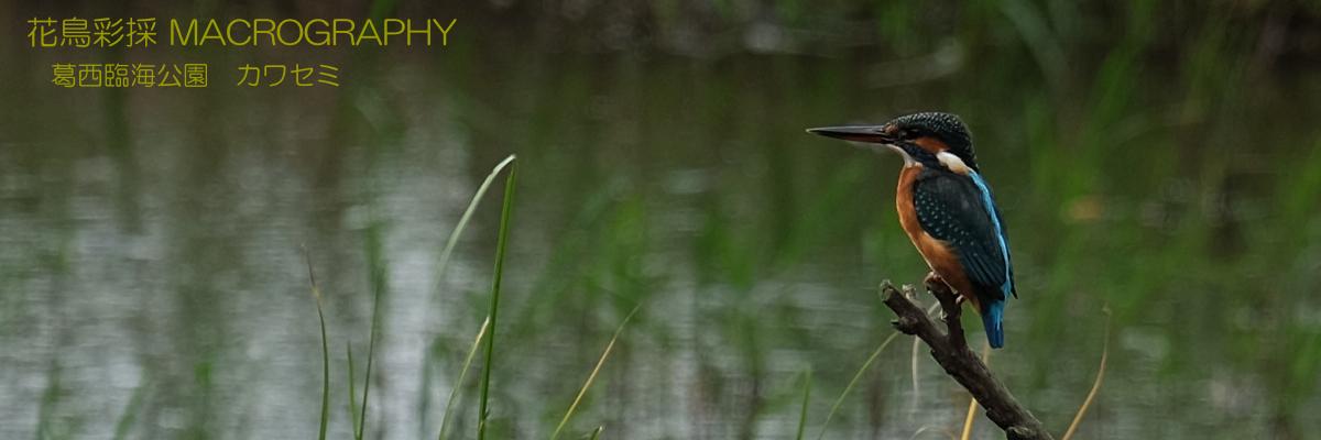 旅して花鳥彩採 MACROGRAPHY