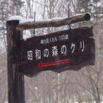 昭和の森のクリ